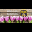 Thumbnail image for Hello Spring!